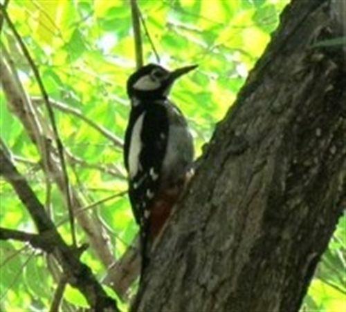La barrera de 50 decibelios limita la diversidad de aves urbanas