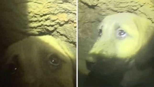 Rescatan con vida a un cachorro atrapado en un pozo a 60 metros bajo tierra