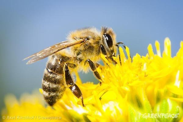 El 75% de las muestras de miel de todo el mundo contienen neonicotinoides #SOSabejas