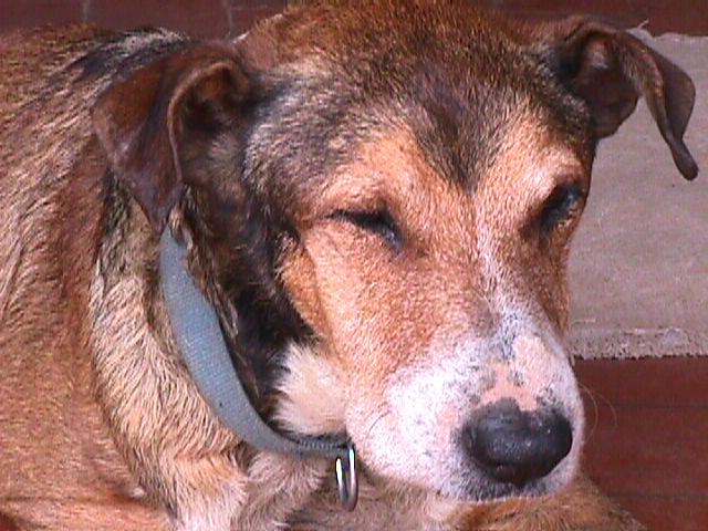 Un animal de compañía es abandonado cada tres minutos en España