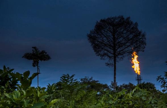 El petróleo 'pisotea' la biodiversidad del Amazonas