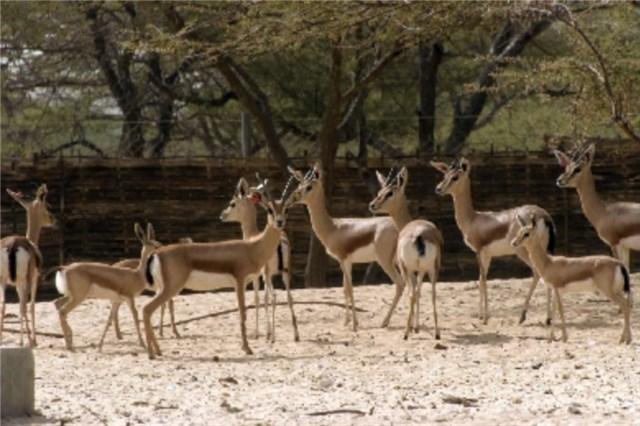 España está satisfecha con el grado de cumplimiento de la normativa por parte de los zoológicos