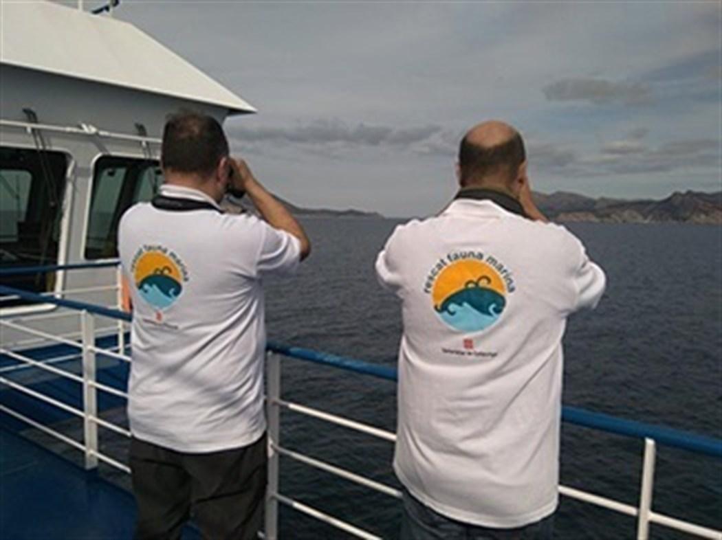 Los cetáceos se recuperan en el Mediterráneo