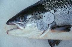 La UE impulsará la acuicultura orgánica
