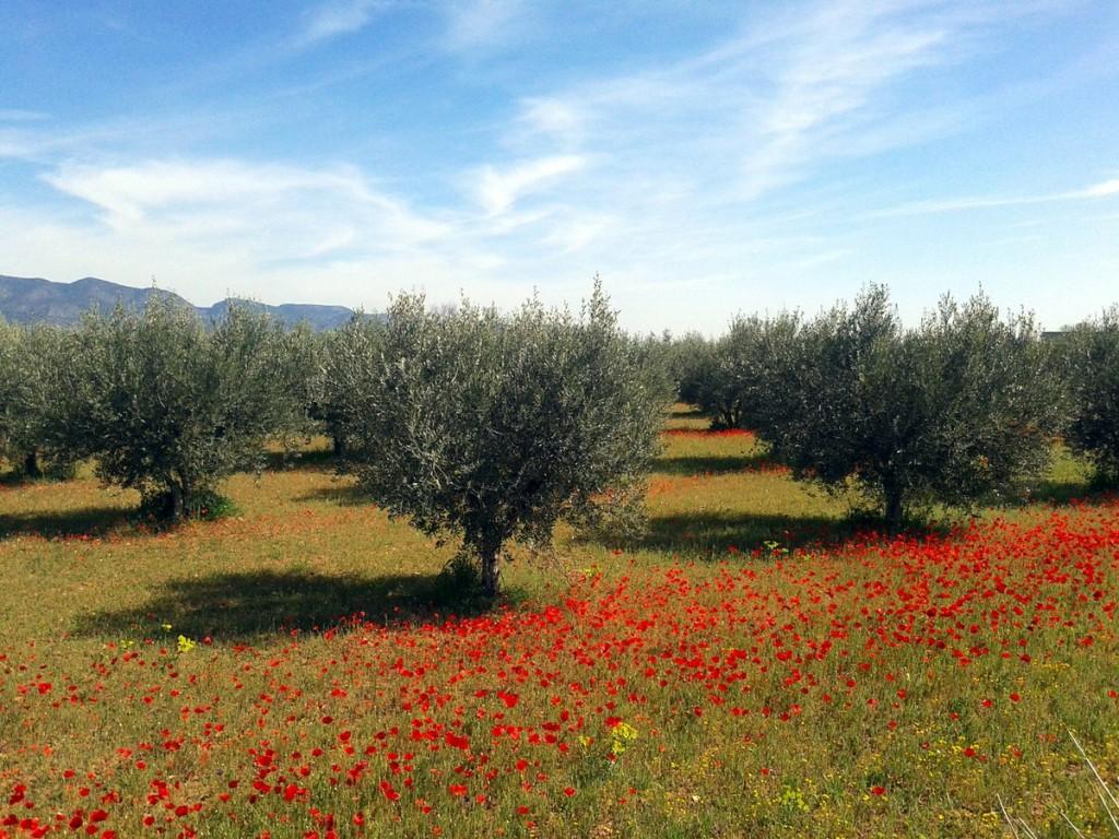Promoción y control de la producción ecológica en Murcia
