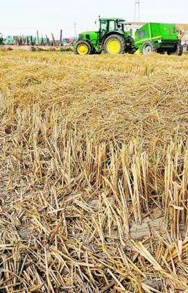 Extremadura participa en un proyecto para el uso de la paja de arroz en industria