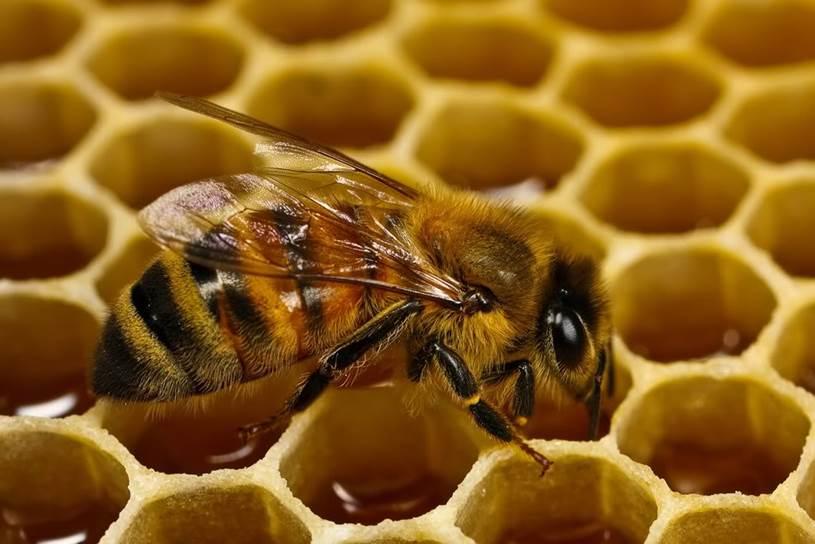 Medio Ambiente financiará a los apicultores para evitar la desaparición de las abejas