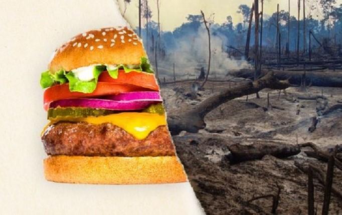 Burger King uno de los culpables de la deforestación en Brasil y Bolivia