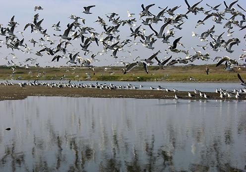 Plan para salvar el humedal más importante de Chile