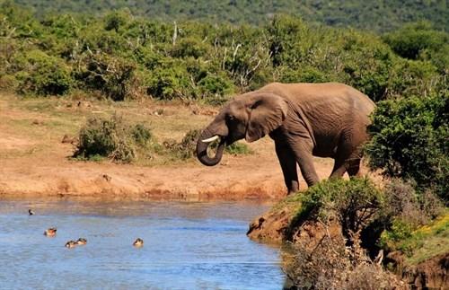 Conoce el lado 'salvaje' de Sudáfrica