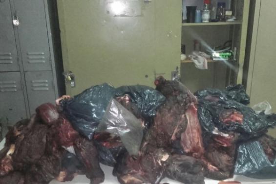 Argentina. Incautan en Chubut 200 kilos de carne de guanaco