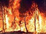El incendio forestal de Montán (Castellón), arrasa más de 400 hectáreas