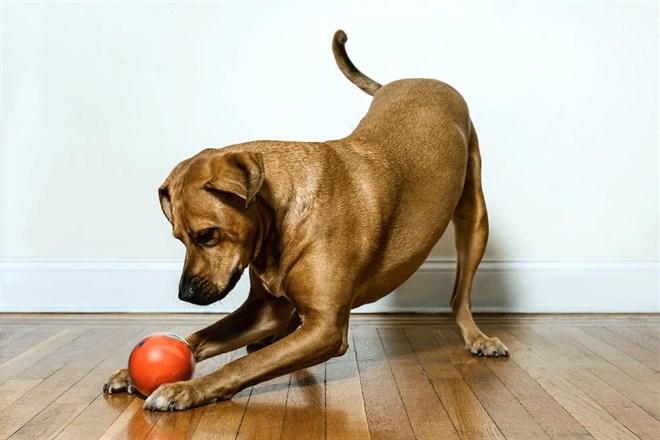 Conoce los mejores 'gadgets' para perros y gatos (Vea estos tres estupendos VIDEOS)