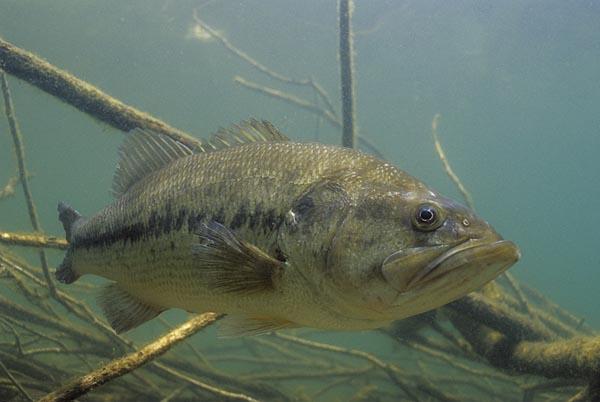 La comunidad científica contraria a modificar el Real Decreto de Especies invasoras