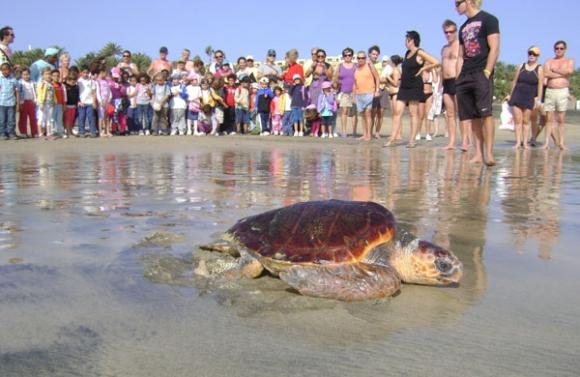 Canarias. El Cabildo de Fuerteventura busca voluntarios para cuidar de sus ejemplares de tortugas durante el verano
