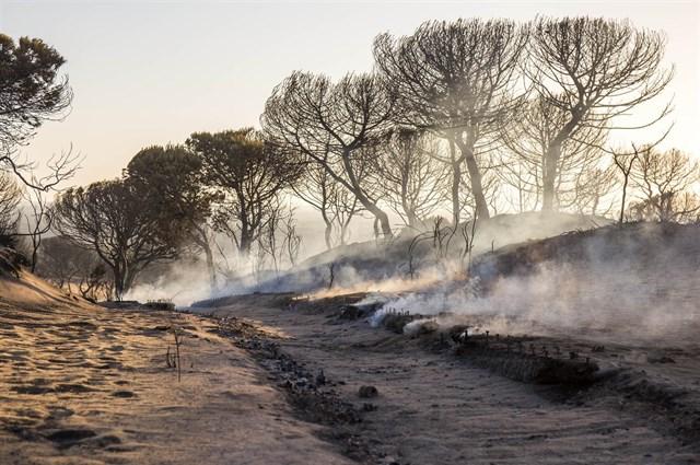 Los dos focos del fuego de Doñana están perimetrados y su aspecto,