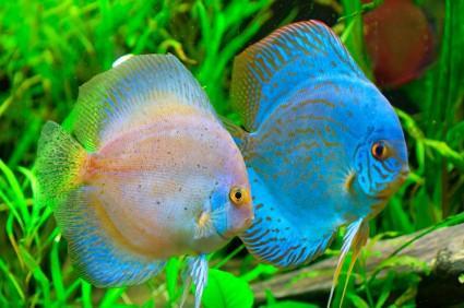 En la Amazonia habita alrededor del 10% de la biodiversidad acuática mundial