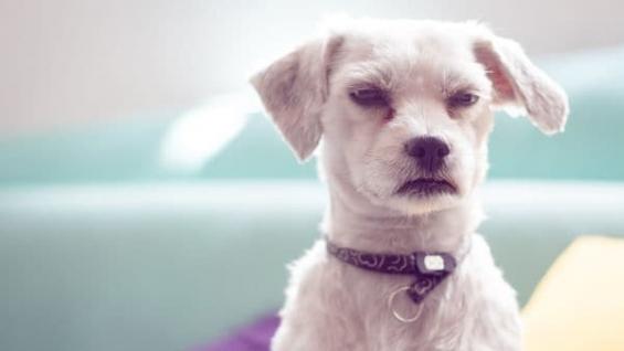 Estados Unidos: Un cachorro fue abandonado en el baño de un aeropuerto junto a una desgarradora nota