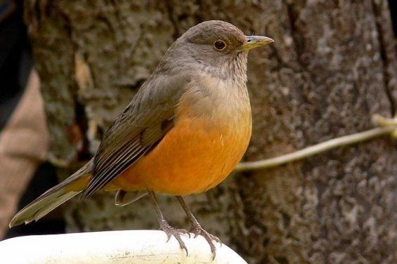 República Dominicana prohíbe la caza de aves silvestres durante 2 años