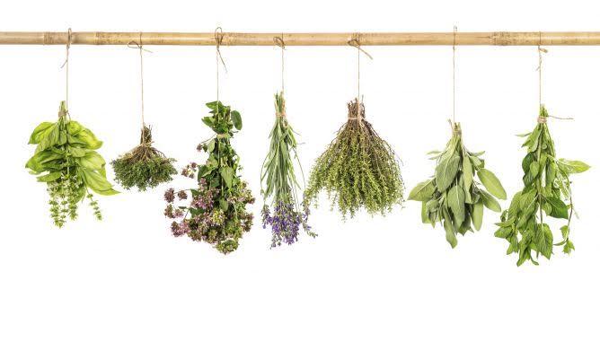 El campo demostrativo ecológico de hierbas aromáticas, medicinales y culinarias de Préjano organiza una visita guiada