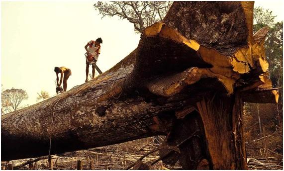 Los 10 países más deforestados del mundo