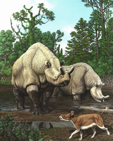 Los cambios de temperatura han sido cruciales en la evolución de los mamíferos