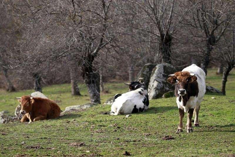 Los animales pueden ingerir demasiado arsénico en pastos afectados por la minería