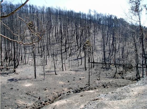España, un tercio de la superficie está afectada por desertificación