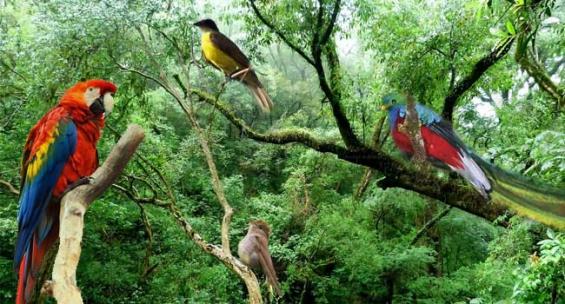 México. El 70% de las especies de aves del país habitan en Chiapas