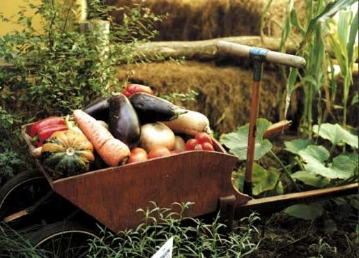 Día Mundial de la Alimentación, por un modelo agroecológico