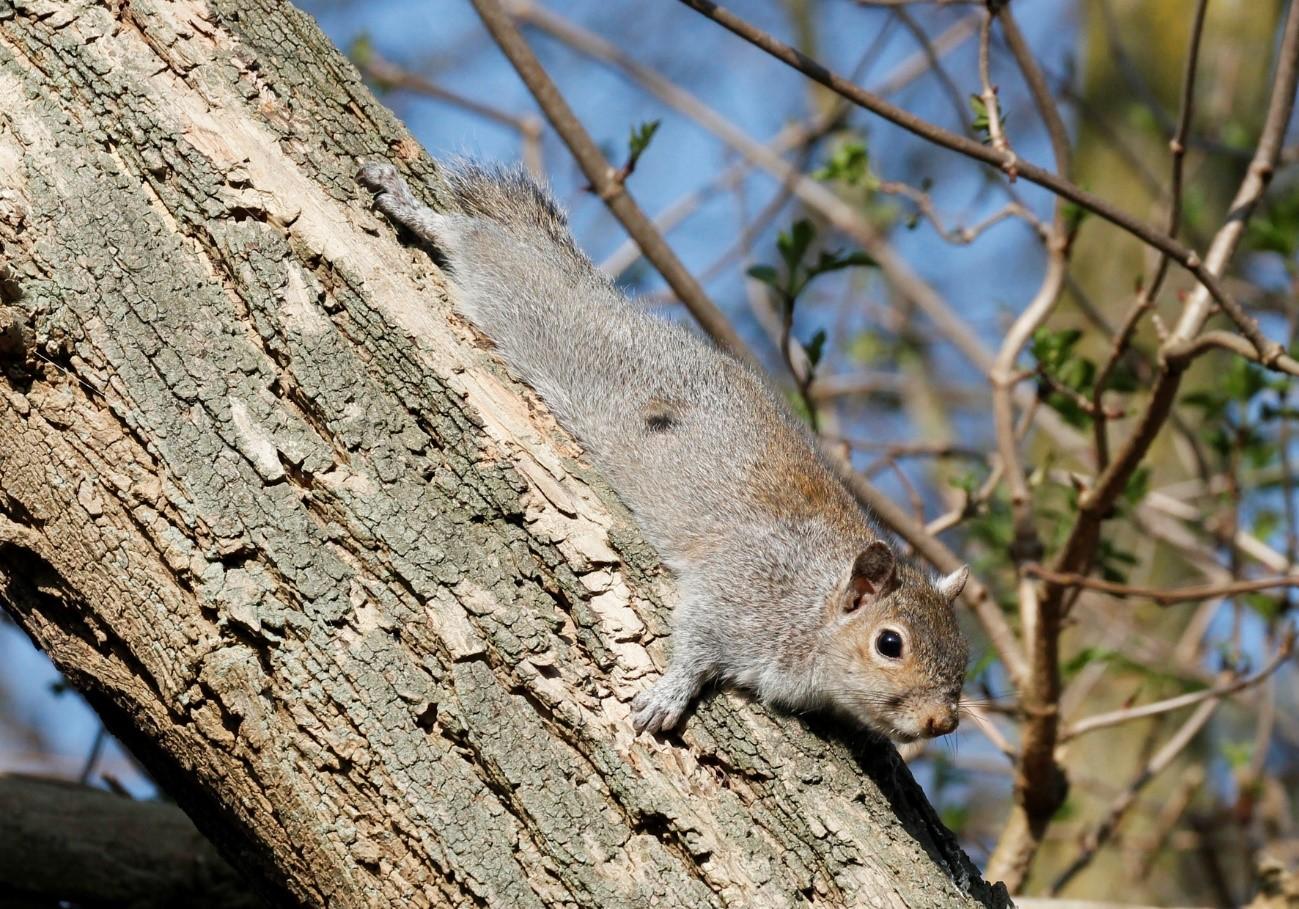 ¿Es posible controlar el flujo de especies invasoras de la biodiversidad?