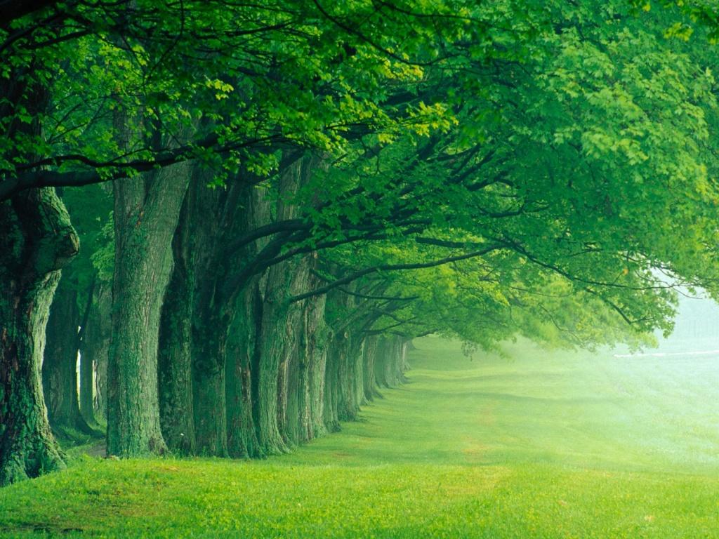 El planeta alberga unos 425 árboles por persona