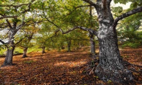 Argentina. Lanzan una campaña para plantar un millón de árboles