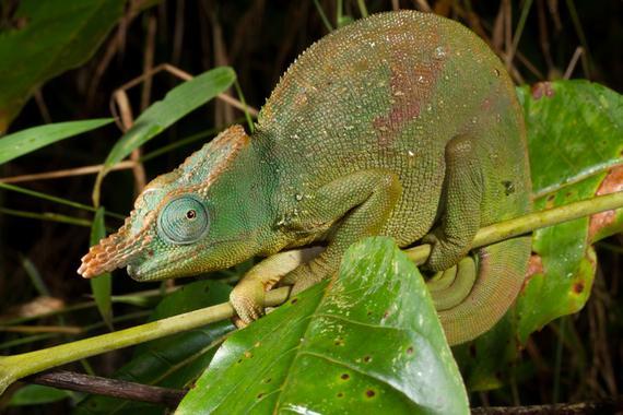 22.000 especies a punto de desaparecer 'definitivamente' del planeta