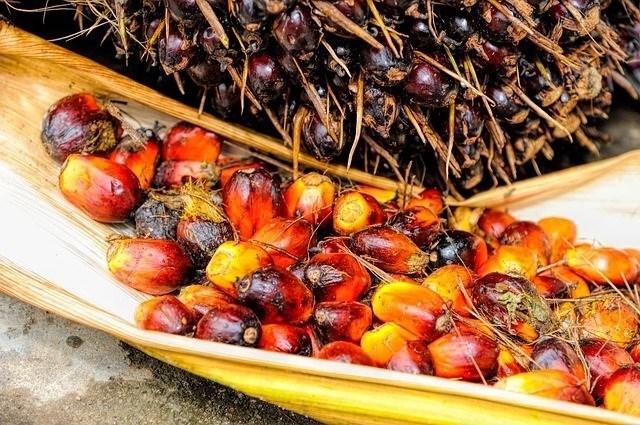 Modera el consumo de aceite de palma