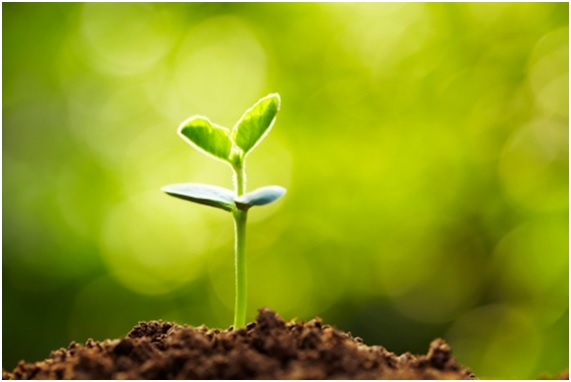 20 curiosidades de las plantas que te impactarán