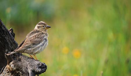 Catálogo canario de especies amenazadas