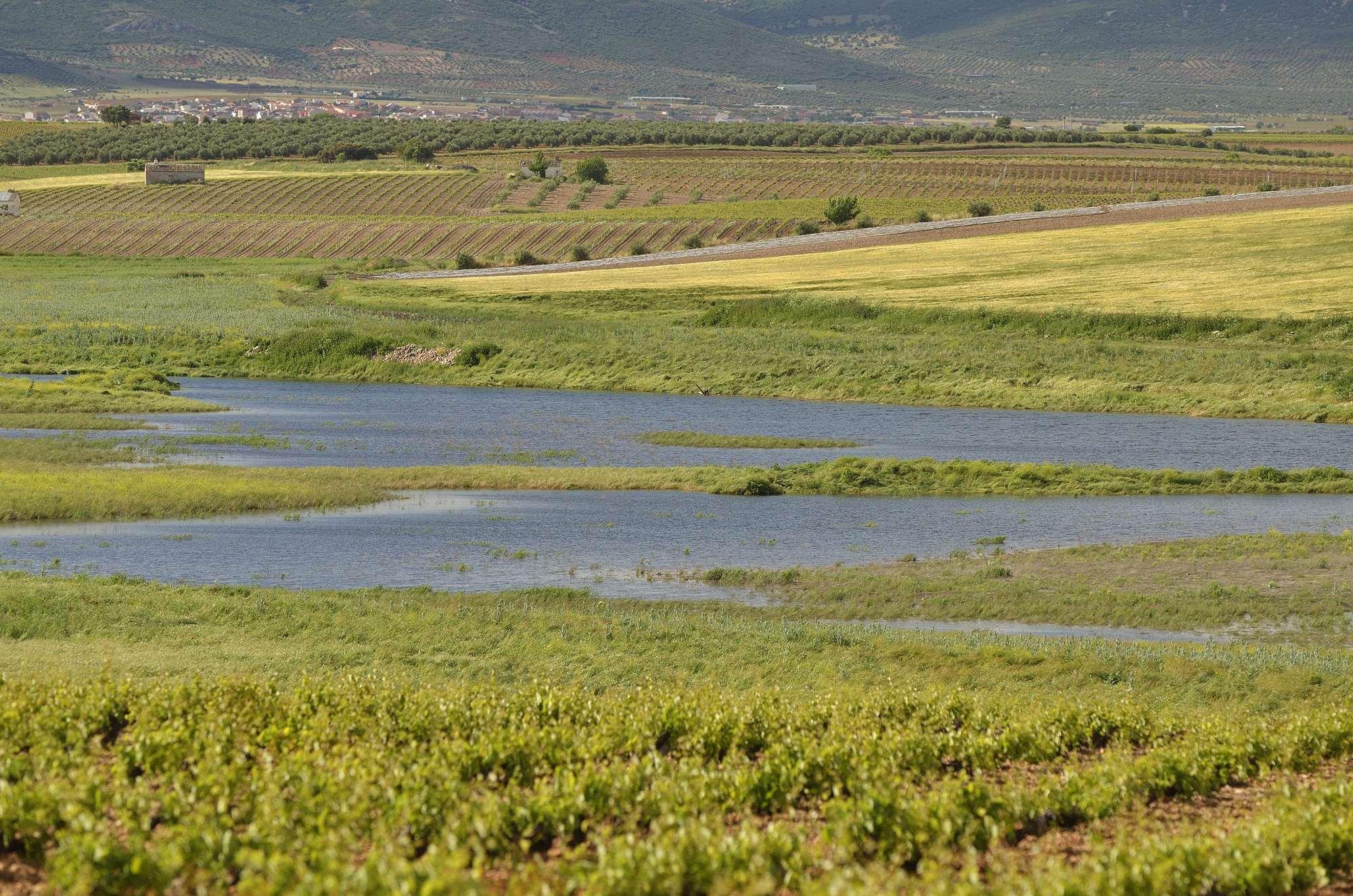 Ahorramos 3.000 millones de litros de agua en Daimiel gracias al riego eficiente de Misión Posible