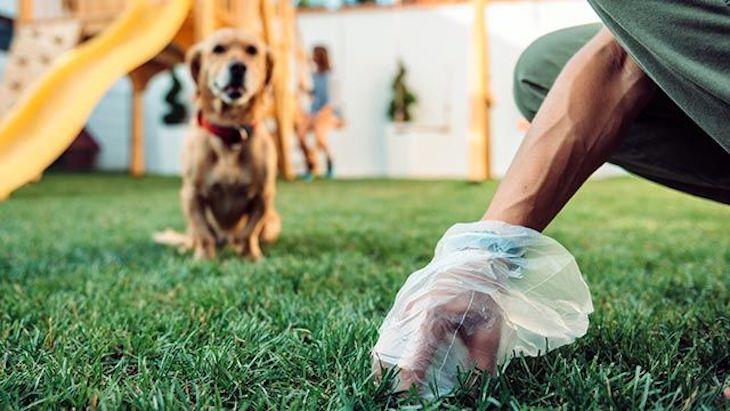 Las deposiciones de tu perro son TU problema ¡Límpialas!