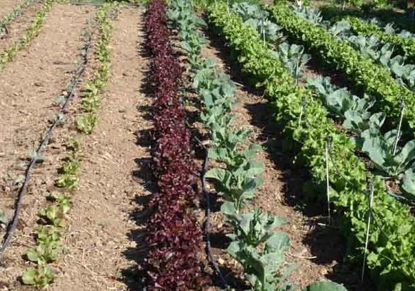 Cañada Real. En Valdemingómez, comenzarán a sembrar un huerto y jardín ecológicos