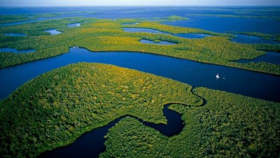 Brasil: La justicia frenó el decreto que autorizó la explotación minera en la Amazonía