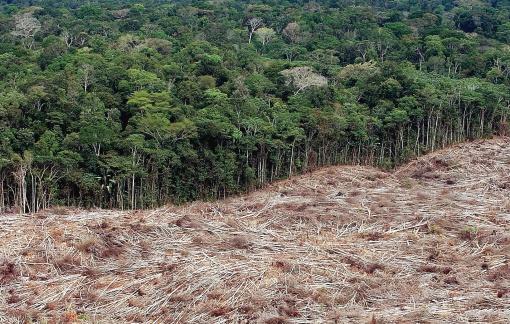 La ley que sentencia a 'muerte' el futuro de la Amazonía