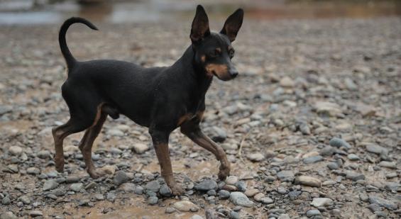 Costa Rica: Se intensifica una colecta de alimento para 100 mil animales damnificados