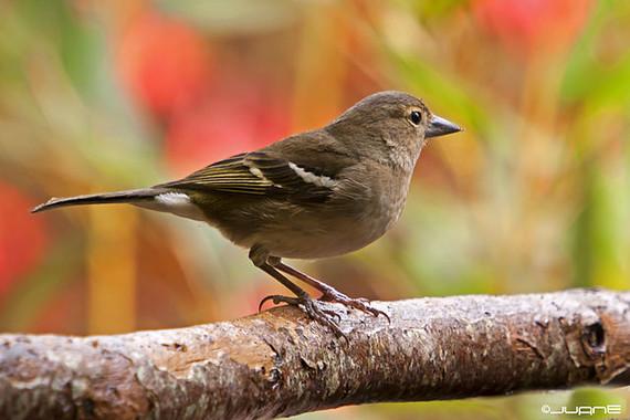 Aves europeas 'contra las cuerdas'