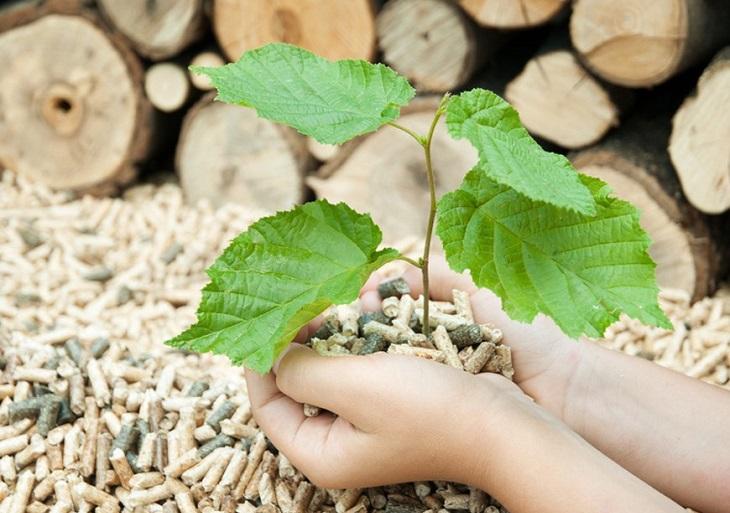 Curso de Energía de la Biomasa
