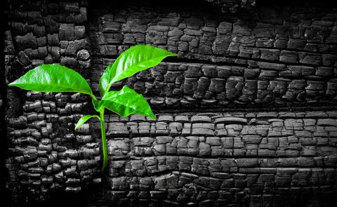 Biocarbón como sumidero de CO2