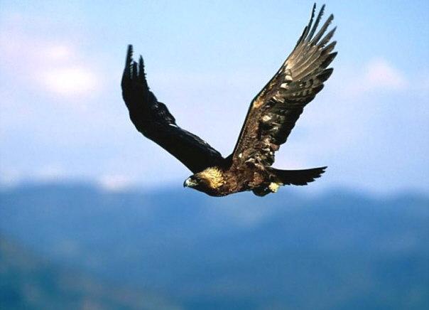 Andalucía. Nacen en cautividad tres ejemplares de águila real en Martín de la Jara