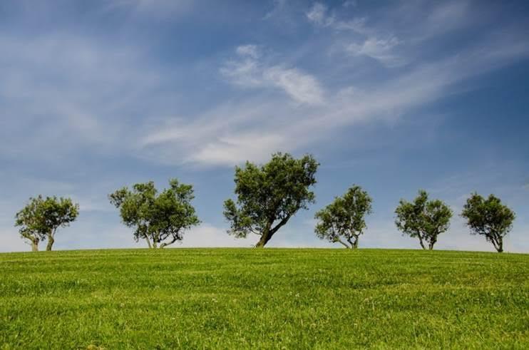 Conoce la ruta medioambiental para 2017 de las organizaciones ecologistas