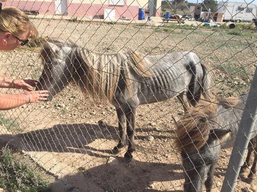 Dos ponis y un burro en estado 'deplorable' rescatados en Cartagena
