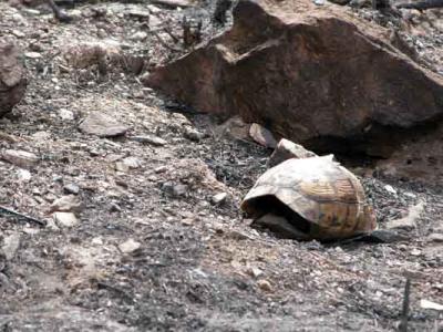 Incendios, falta de planificación y gestión inadecuada de los espacios forestales